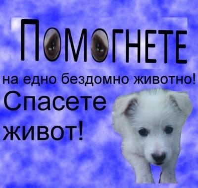 Убитват бездомни кучета  ...