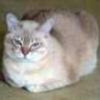 Бурмила котка
