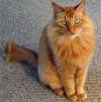 Картезианска котка
