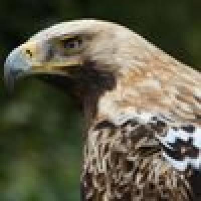 Граблив орел