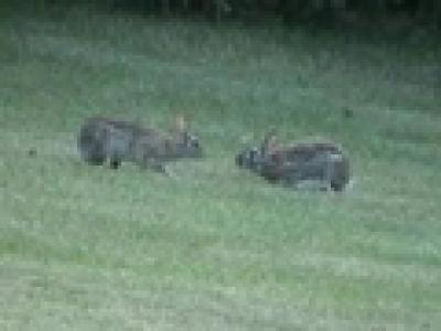 Бой на диви зайчета- клип