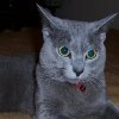 Руска синя котка