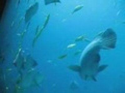 БГ Риболов - Най-големия аквариум в света