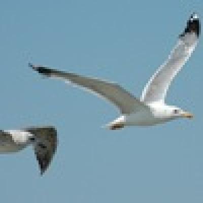 Диви птици