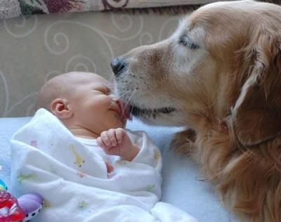 Кучетата спасяват от алергии - снимка