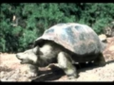 Странни животни- клип