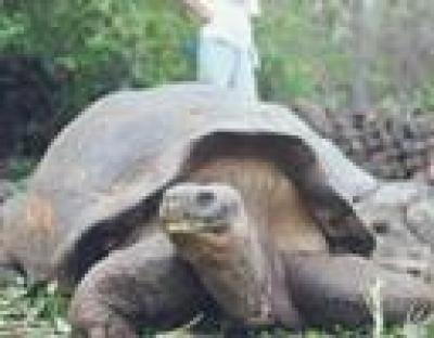 гигантска костенурка