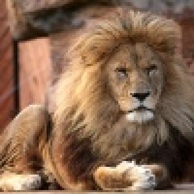 Лъв Заглавна