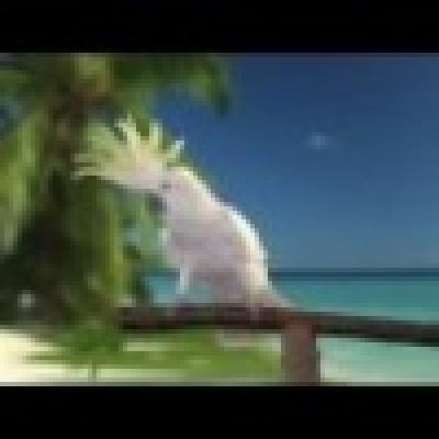 Танцуващият папагал Snowball