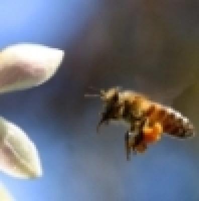 Наръчник по пчеларство