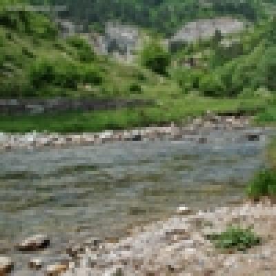 Река Златна Панега - Балканска пъстърва