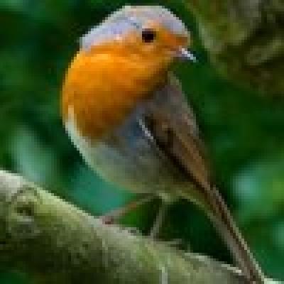 Червеношийка