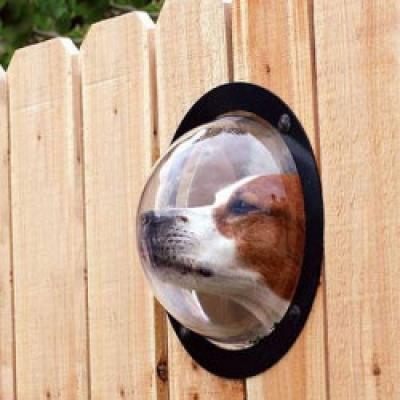 Ако кучето Ви живее на двора, -