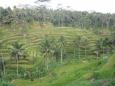 Bubo Anne Bali 2012 12